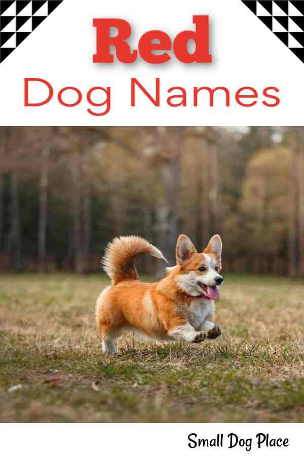 Red Dog Names Perfect for your Flaming Hot Puppy