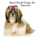 List and Discusion of breeds that are perfect for seniors and retirees.