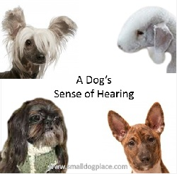 A dog's sense of hearing