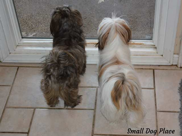 A room with a view may help some dogs with Separation Anxiety.