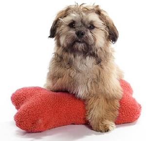 Shih Poo Posing on a toy