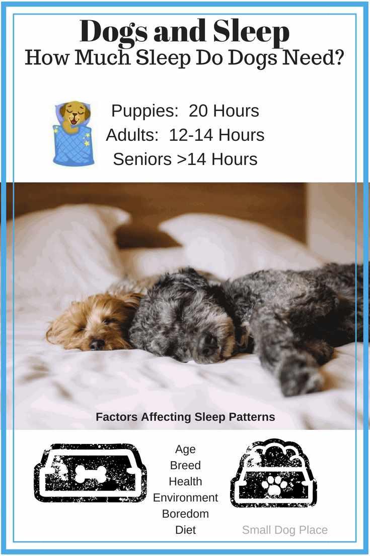 Dogs And Sleep How Much Sleep Do Dogs Need Each Day