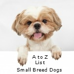 A to Z Small Dog List