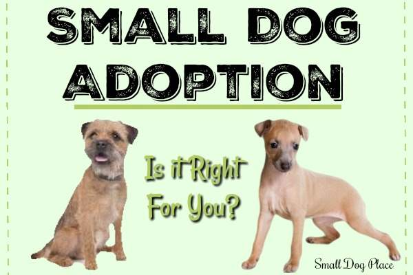 Small Dog Adoption:  Is it Right for You?