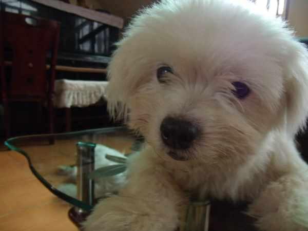 My Fluffy White Dog Named Sweet