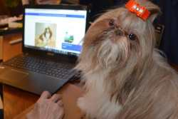 A dog is sitting next to a laptop and looking at the camera.  Link to the article on Technology for Dog Owners