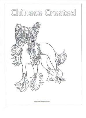 chinese crested coloring page