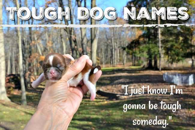 Tough Dog Names Great Name Ideas For