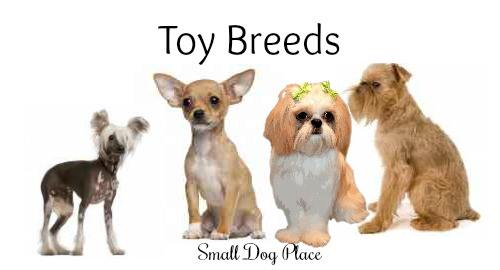 Toy Dog Breeds List : Toy breeds list wow