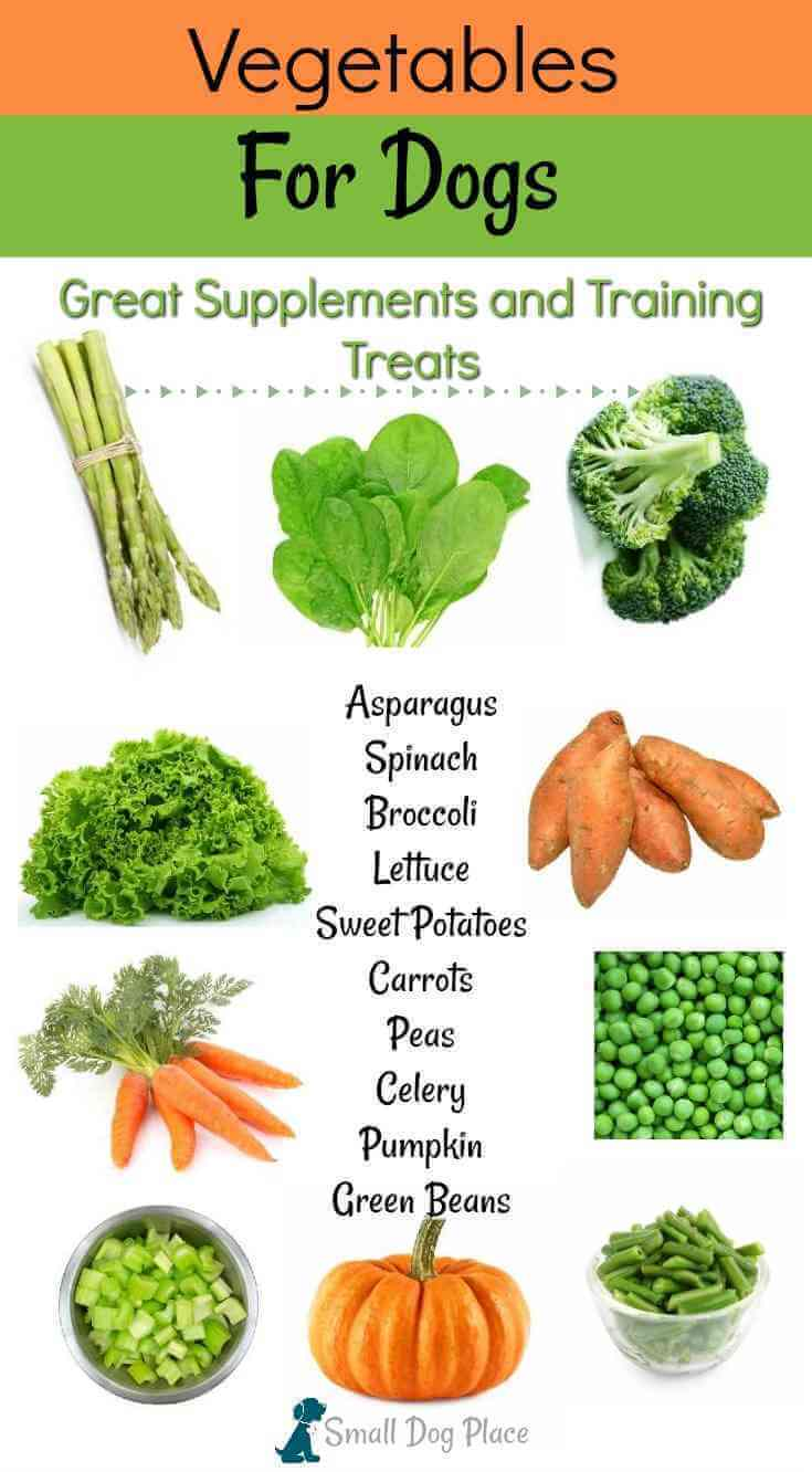 Vegetables for Dogs: 20 Nutritious