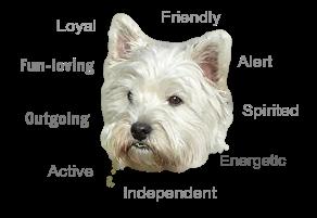 Westie Personality Traits