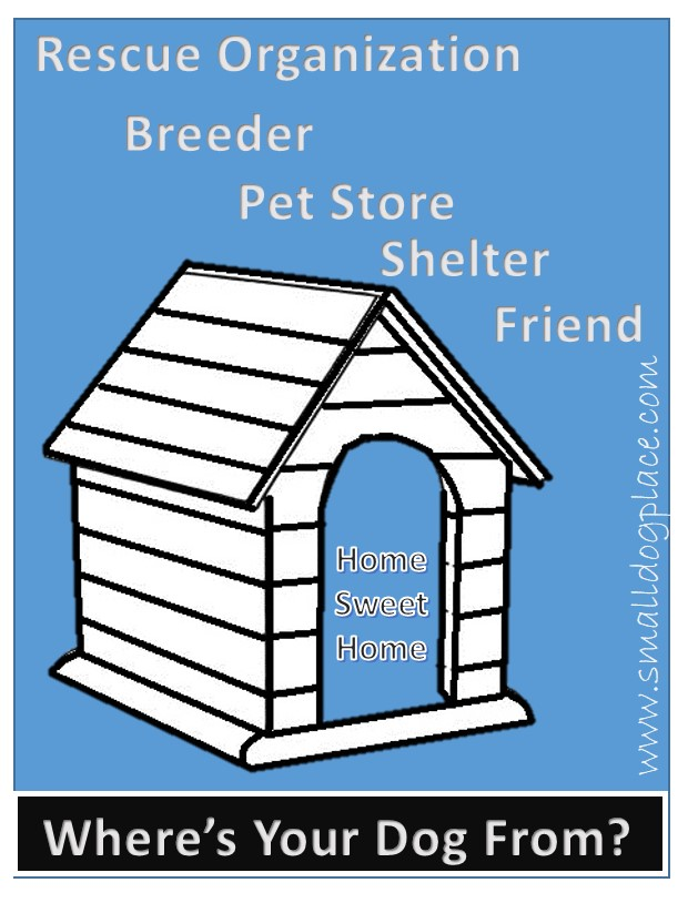 Choices of where to obtain a dog:  rescue organizations, breeders, pet stores, shelters, friends