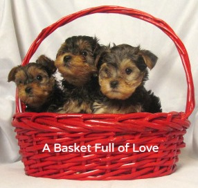 A basket full of Hybrid Puppies