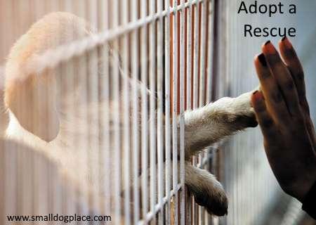 Adopting a Rescue in the UK