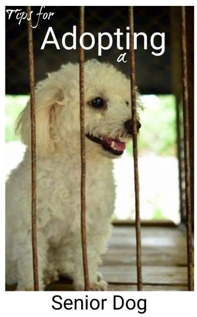 Tips for Adopting a Senior Dog
