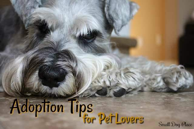 Small Dog Adoption Tips for Pet Lovers