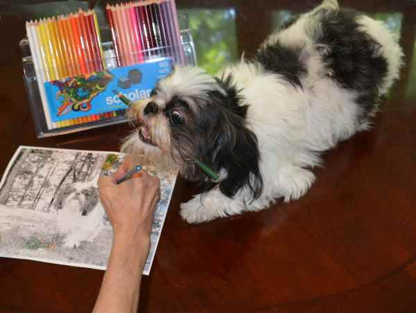 Adult coloring for Dog Lovers:  Even the dog is getting involved.