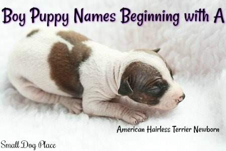 Boy Puppy Names Beginning with A: Thousands of Names