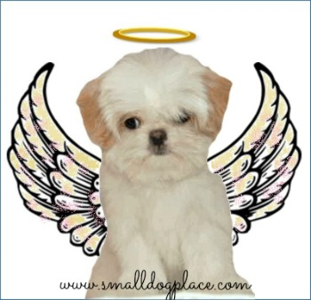 Turn Puppy Behavior Problems into the Perfect Puppy Angel