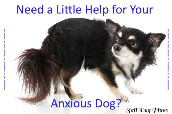General Anxiety Disorder in Dogs Link