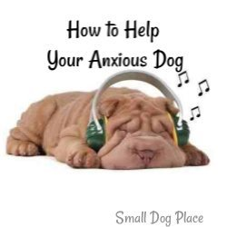 Ways to Help Your Anxious Dog Link
