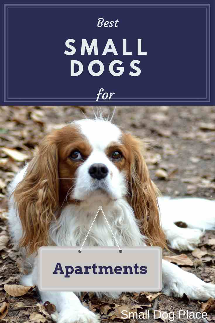 best small dogs for apartments