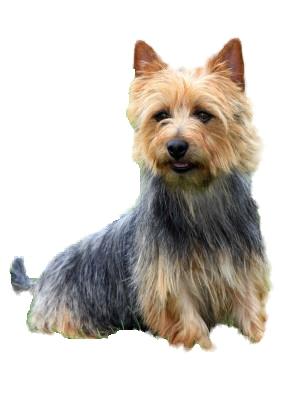 Small Dog Breeds List A Z - photo#43