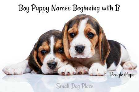 Boy Puppy Names Beginning with B