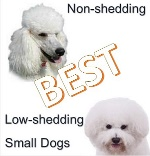 Nonshedding Tiny Dogs