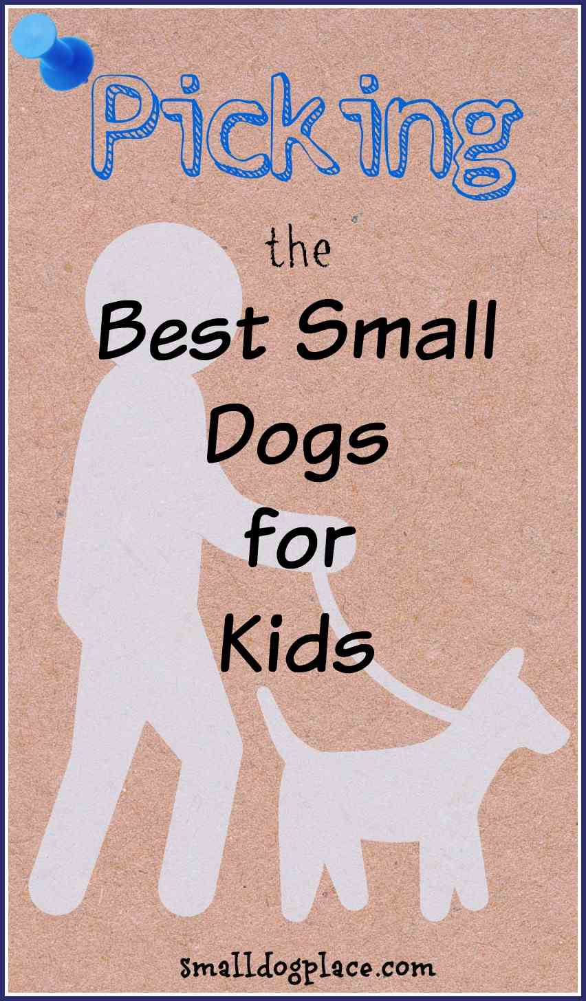 Guide To The Best Small Breed Dogs For Kids
