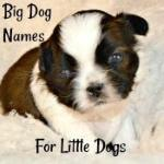 Big Dog Names for Little Dogs