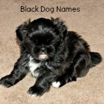 Names for Black Dogs