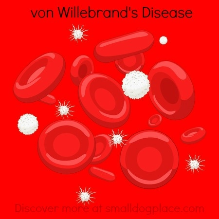 vonWillebrand's Disease:  What is it?