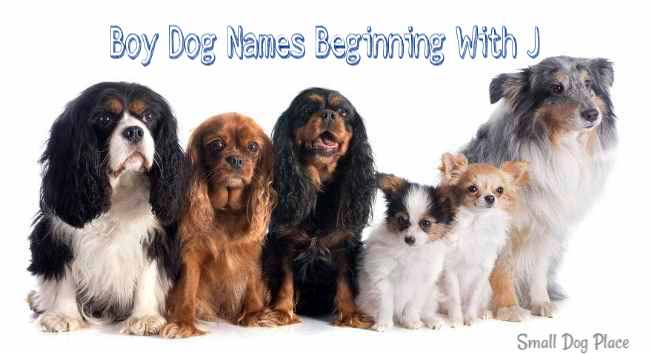 Boy Puppy Names Beginning with J | Small Dog Place