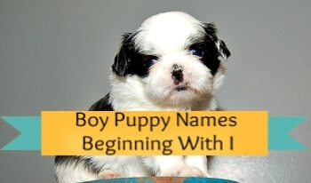 Boy puppy names beginning with I