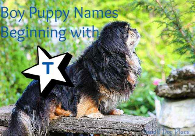 Boy Puppy Names Beginning with T