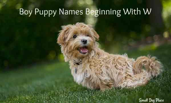 Boy Puppy Names Beginning with W