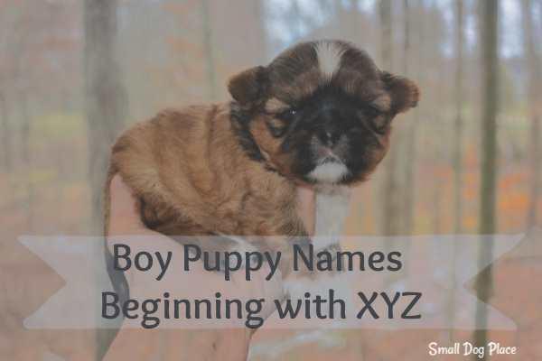 Boy Puppy Names Beginning with XYZ