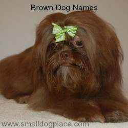 Fantastic Fluffy Brown Adorable Dog - brown-dog-names  Pictures_3197  .jpg