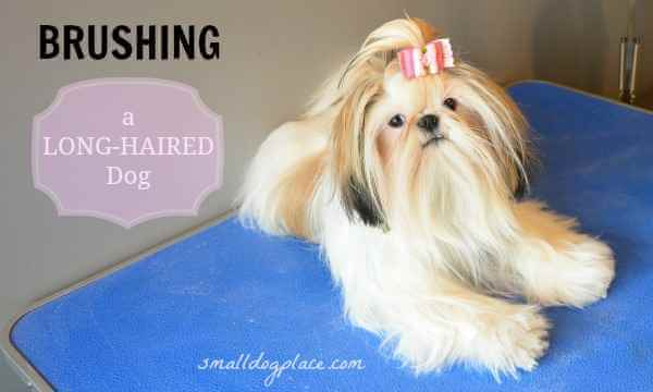 Brushing a Long Haired Dog:  Tricks of the Trade