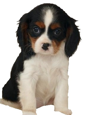 Bringing home a new puppy is exciting, but are you ready?  Find out.