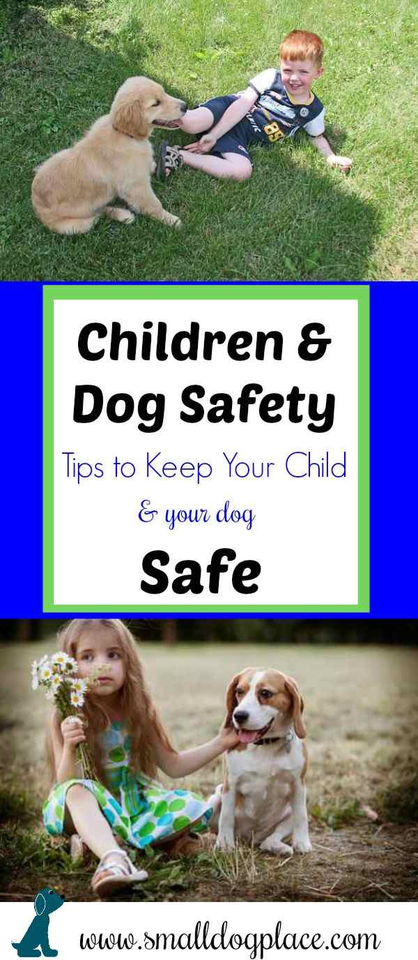 Children and Dogs can play safely together with a little help from an adult.