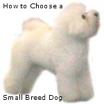 How to Choose a Small Breed Dog:  Things to consider before that first big wet puppy kiss.