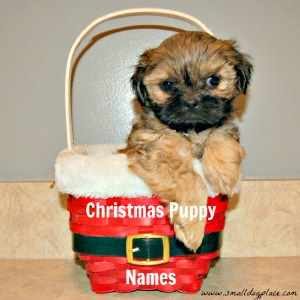 Christmas Puppy Names
