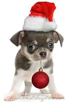 Cute Christmas Puppies.Christmas Puppy Names Small Dog Place