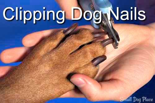 Clipping Adult Dog Nails