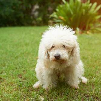 Constipation in puppies and dogs:  What can you do?