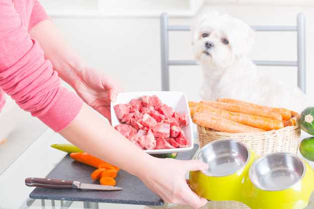 Cooking for Your Dog: Owning a Hot Pot Can Earn You Two Paws Up!