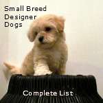 Complete List of Designer Dogs created by small breed dogs.