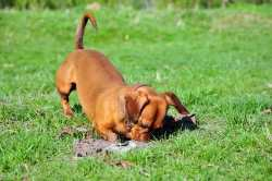 Tips for Building a Dog-Friendly Garden with the link to an article.